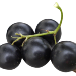 Sexual Health – Improvement – Black Currant – Home Remedy