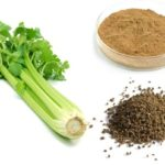 Celery Seed – Health Benefits – Home Remedies